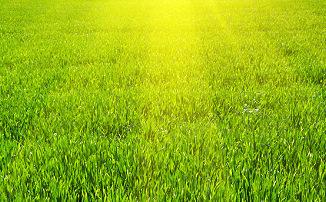 Frischer Rasen bei Sonnenschein