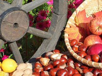 Kastanien und Äpfel