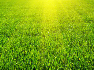 Grüner Rasen und Sonnenschein