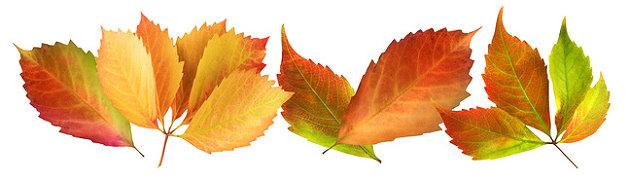 Herbstzeit ist hochbeetzeit jetzt anlegen for Garten im herbst anlegen