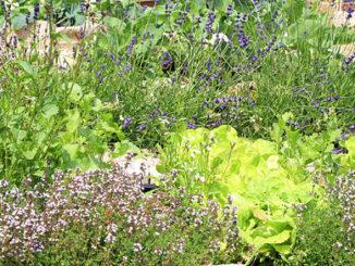 Neues Heim für Pflanzen