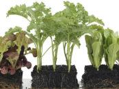 Setzlinge für den Garten im Februar