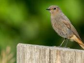 Ein Vogel im Garten