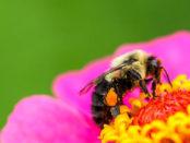 Biene freut sich über eine Blume