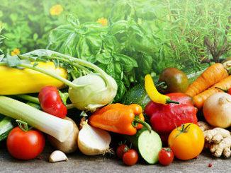 Gemüse im August ernten