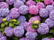 Eine schöne Blumenstaude