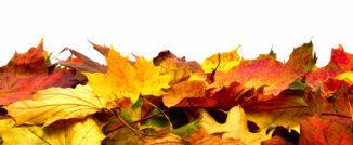 Herbstlaub auf der Gartenmesse
