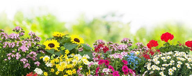 Verschiedene Blumen
