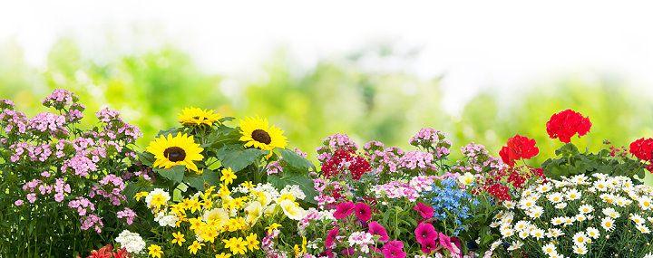Blumenbeet anlegen - Vorbereiten, Einpflanzen