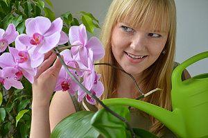 Orchideen Richtig Pflegen Tipps Zum Einpflanzen Giessen Dungen