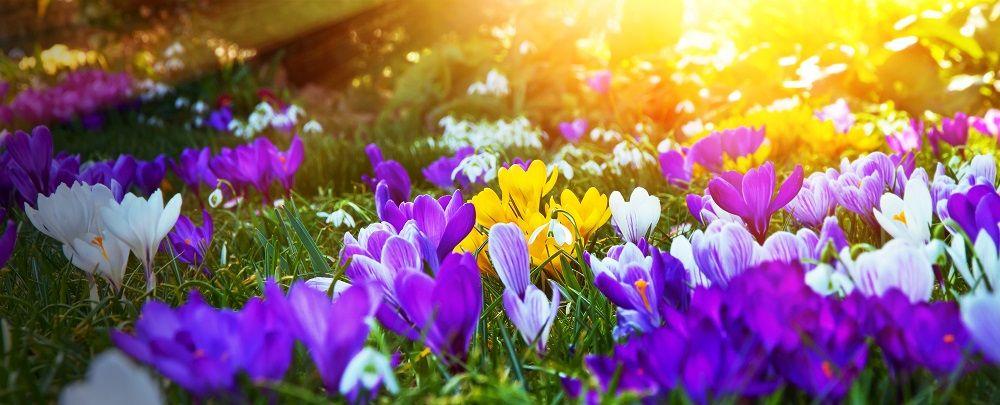 Der Marz Im Garten Gartenarbeit Beete Aufraumen Pflanzen