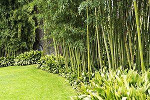 bambus im garten - tipps zur pflege der bambuspflanzen, Garten und erstellen