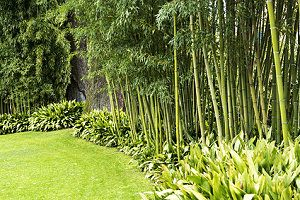 Beau Bambus Im Garten