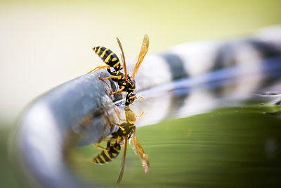 Wespennest Vertreiben wespen im garten vertreiben verhaltensregeln