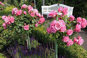 Hervorragend Einen Romantischen Garten Anlegen